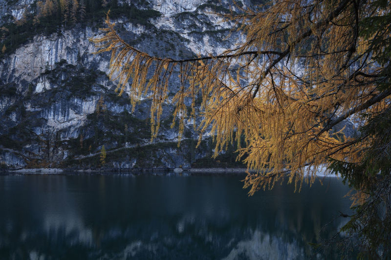 Reflection of trees in lake at lago di braies, dolomites mountains