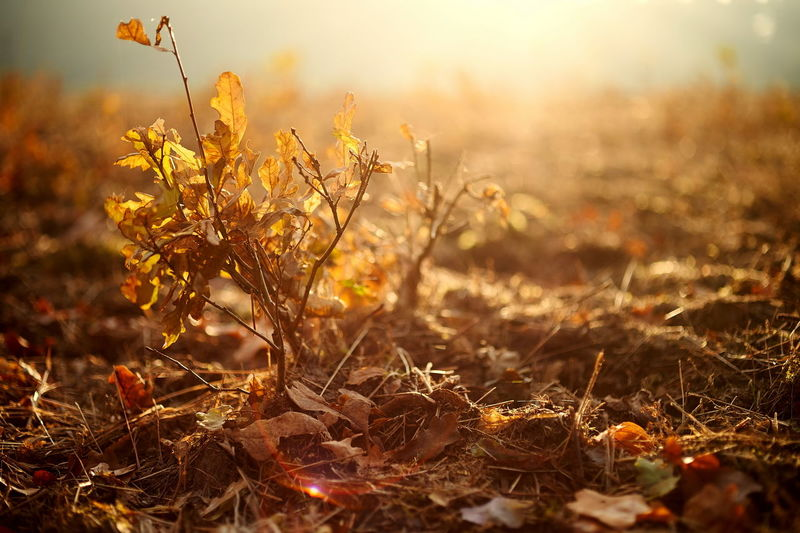 Autumn Beauty In Nature Close-up Day Field Fragility Grass Growth Landscape Leaf Nature No People Outdoors Plant Sunlight Sunset Tranquility