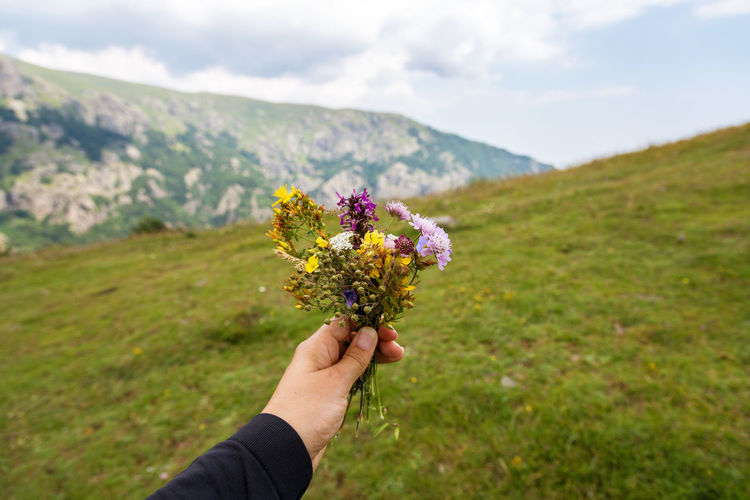 Cropped hand holding purple flowering plant on field