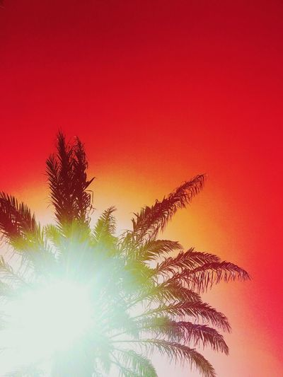 🔥 Hot Day Sun Palm Tree Red