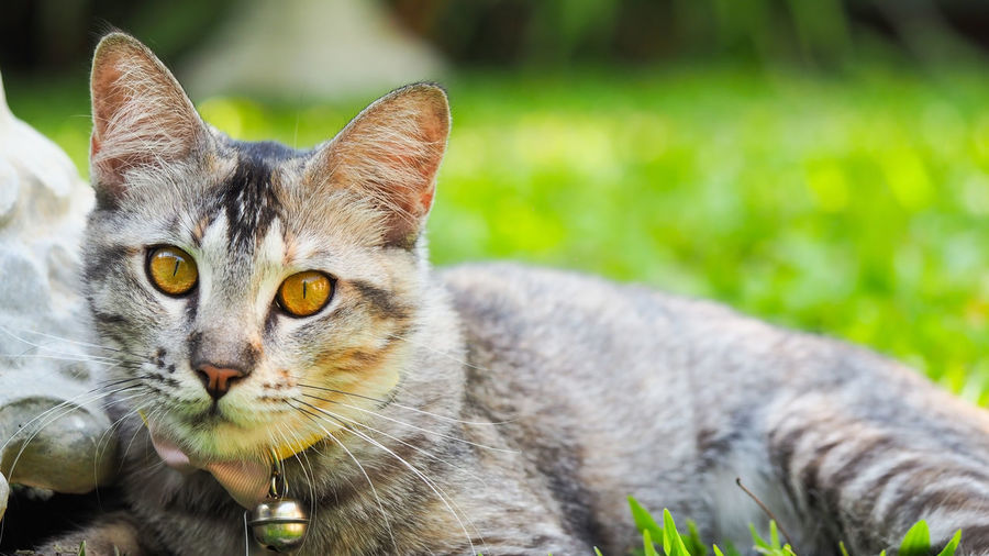 Cute kitty looking something and relaxing time in garden with soft focus for animal pet background Cat Feline One Animal Domestic Cat Mammal Portrait Domestic Animals Looking At Camera Pets Domestic Vertebrate Focus On Foreground Whisker Close-up No People Day Plant Yellow Eyes Animal Eye Tabby