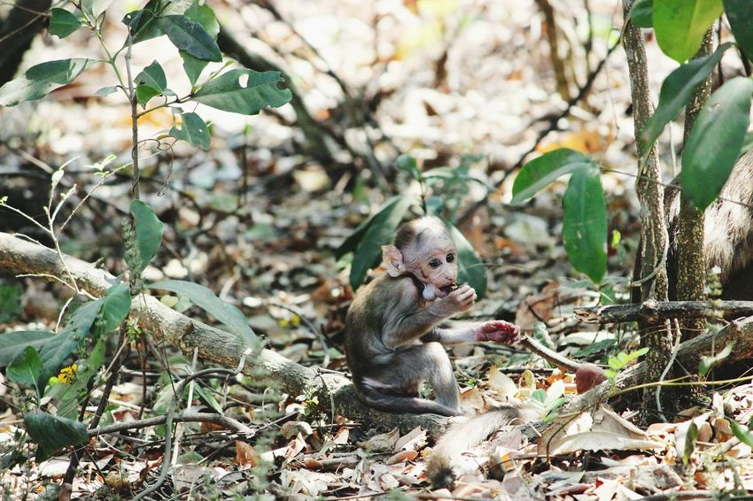 Wildlife Photography Monkey Love Karnala Bird Sanctuary Panvel Cute Hunger In The Forest