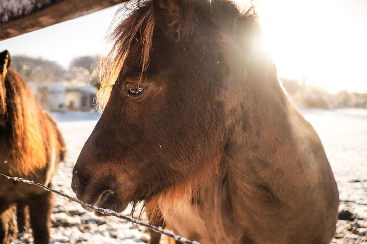 Close-up of a horse looking away