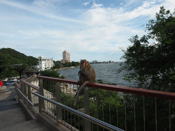 Monkey on railing by trees against sky