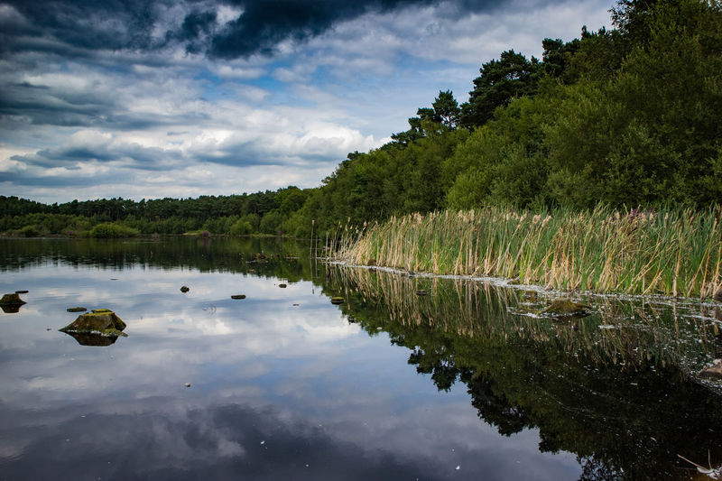 Delamere Forest Lake // Water Tree Nature Outdoors No People Tranquility Beauty In Nature Scenics Lake Day Sky Landscape Beauty In Nature Reflection Low Angle View EyeEm Gallery Cloud - Sky Delamereforest Water Reflections Outdoor Photography Reflections Trees Forest Walk Clouds And Sky