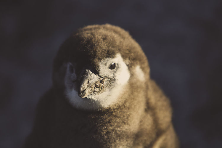EyeEm Selects Animal One Animal Animal Wildlife Animal Head  Animal Body Part Close-up Animals In The Wild Mammal No People Young Animal Looking At Camera Nature Aquatic Mammal Animal Themes Bird Sea Life Outdoors Portrait Penguin