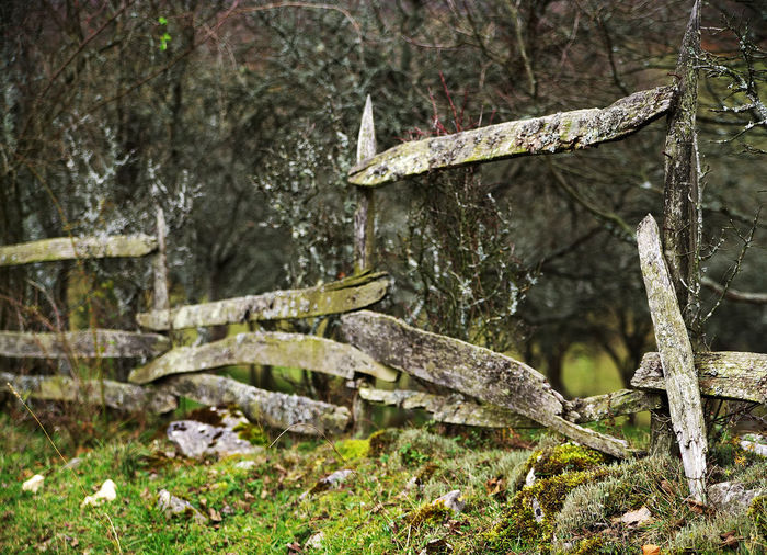Old damaged wooden fence Tree Plant Trunk Tree Trunk Forest No People Nature Day Land Growth Tranquility Moss Outdoors Focus On Foreground Lichen Fence Fences Fences Weathered Fences Of Nature Old Damaged Damaged Fence Nature Village Romania