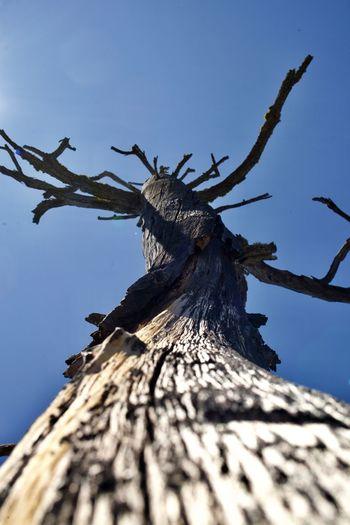 Sky Wood -