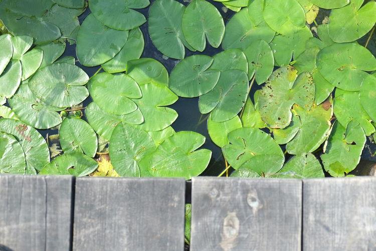 Beautiful glimpse into the vegetal world