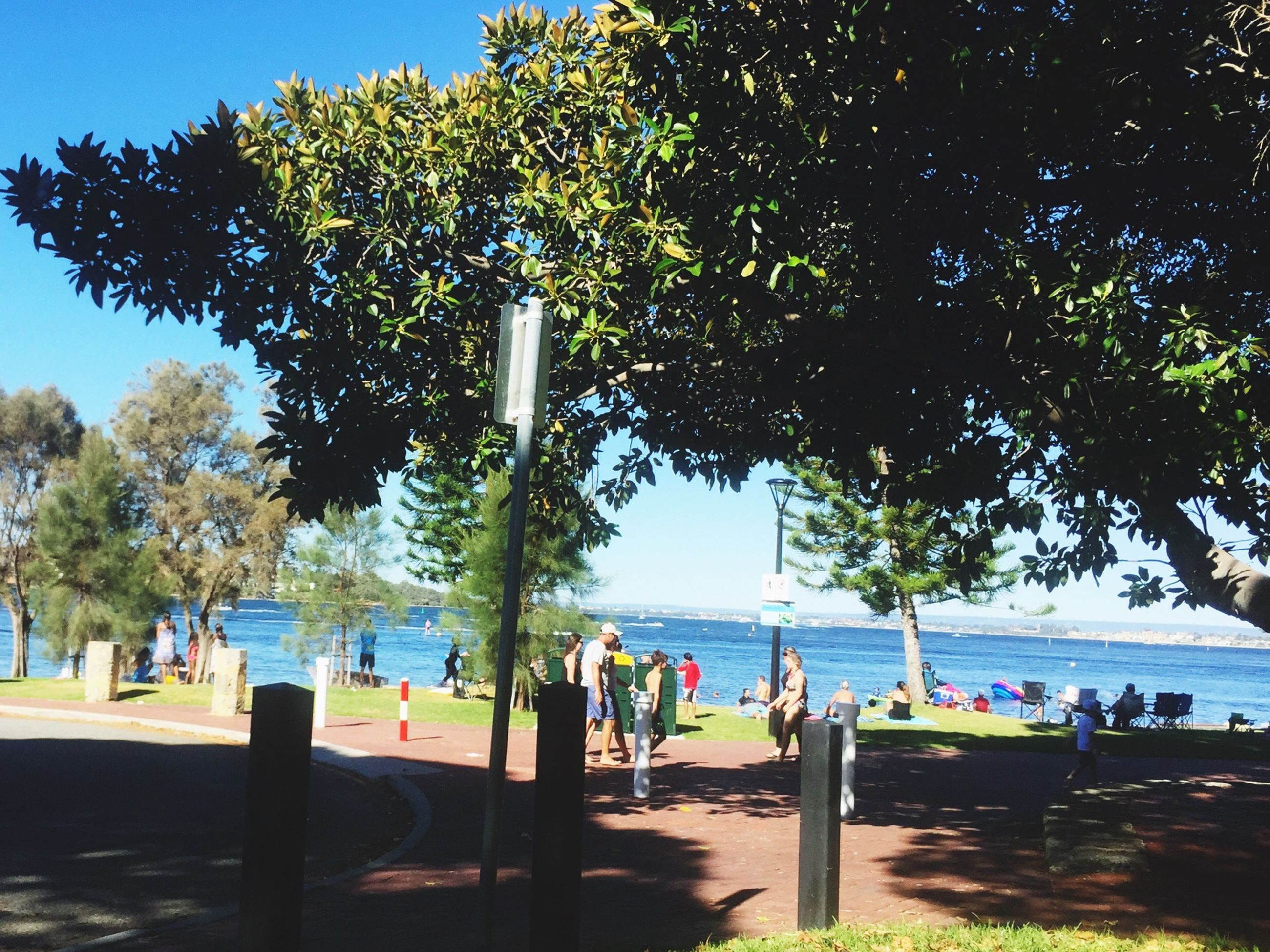 tree, men, person, lifestyles, leisure activity, large group of people, water, beach, group of people, medium group of people, sunlight, sky, shadow, sea, nature, mixed age range, park - man made space, vacations, blue