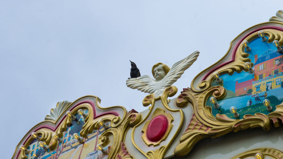 Angels and starlings. Angel Angels Animals Bird Birds Carousel City City Life Fair France French Gold Merry Go Round Paris Ride Starling Traditional Wildlife Adapted To The City