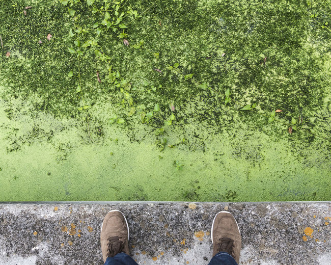 Low section of man standing on retaining wall by mossy pond