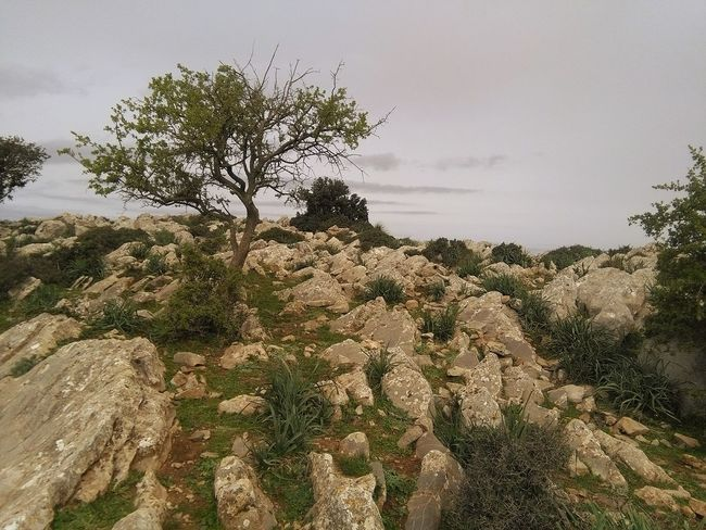 Hanging Out No People Montagne Djebel Zaghouan Zaghouan Tunisia Eyemm Nature Lover