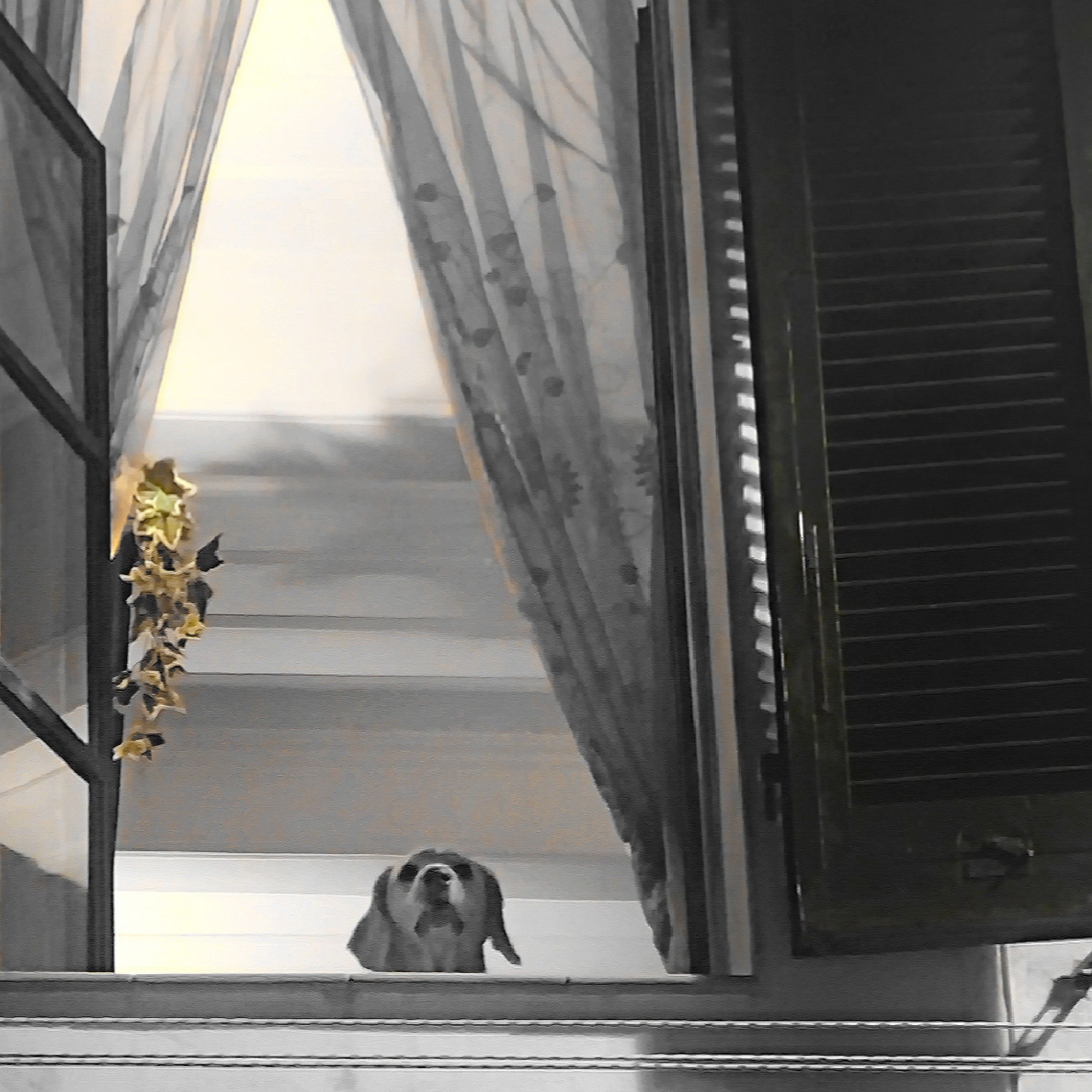 animal themes, mammal, domestic animals, one animal, pets, dog, sitting, steps, full length, staircase, sky, in front of, outdoors, no people, zoology, distant, the way forward, pampered pets, loyalty