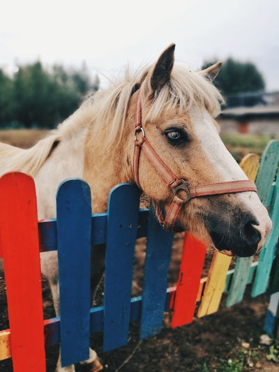 Close-up of horse behind a colorful fence