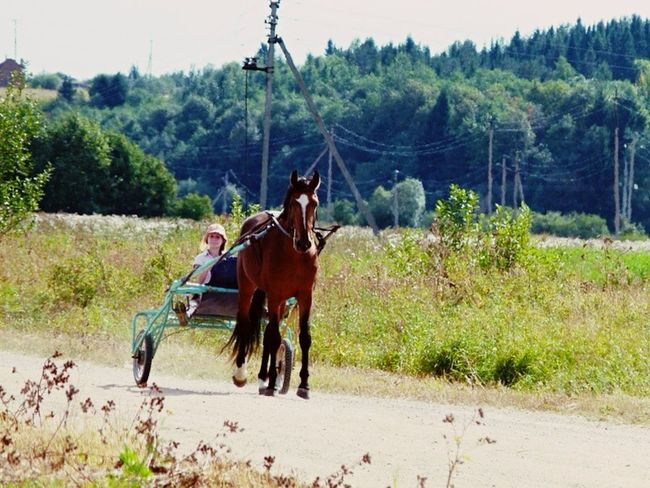 Карфаген 2012 Horse Horses Summertime Summer Summer 2012
