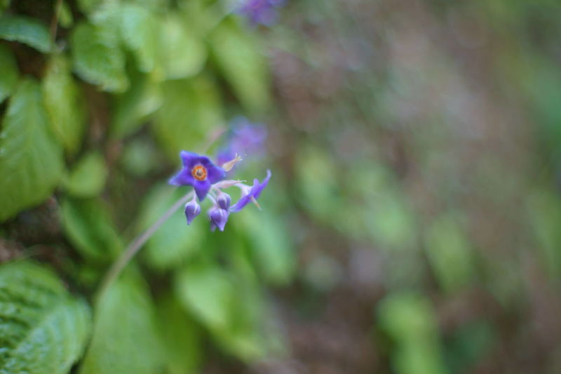 Bokeh Bokeh Photography Bokehlicious Flower Flowers Flowrrs And Plants Nature Nature_collection
