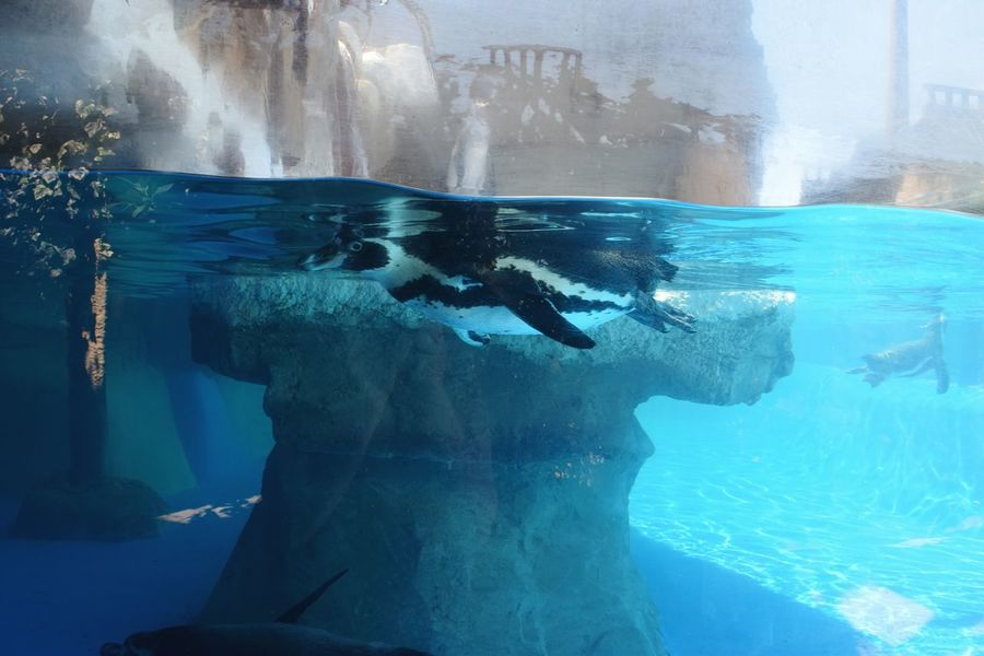 Water Nature Flowing Water Outdoors Beauty In Nature Power In Nature Swimming Tranquility Scenics Pinguine Underwater Blue Splashing Zoo Zoology One Animal Wildlife