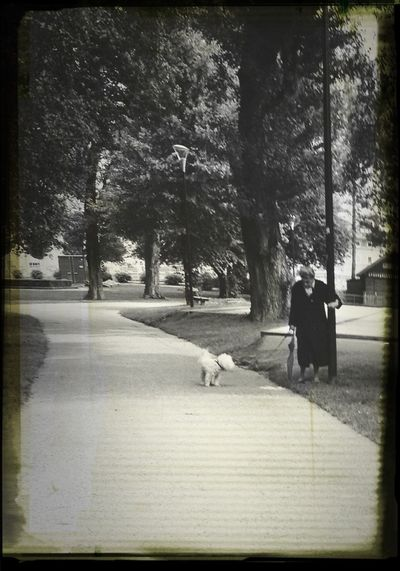 Dog Walking Dog Park Old Woman Old Woman Dogwalk Women Around The World