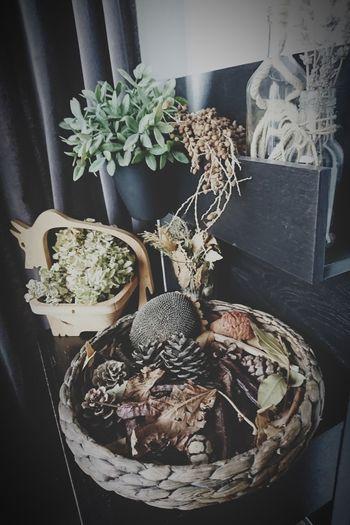 Autumn colors Various Arrangement Potted Plant Close-up Plant Shelves Display Collection