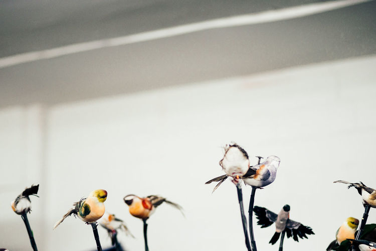Low Angle View Of Taxidermy Birds Against White Curtain