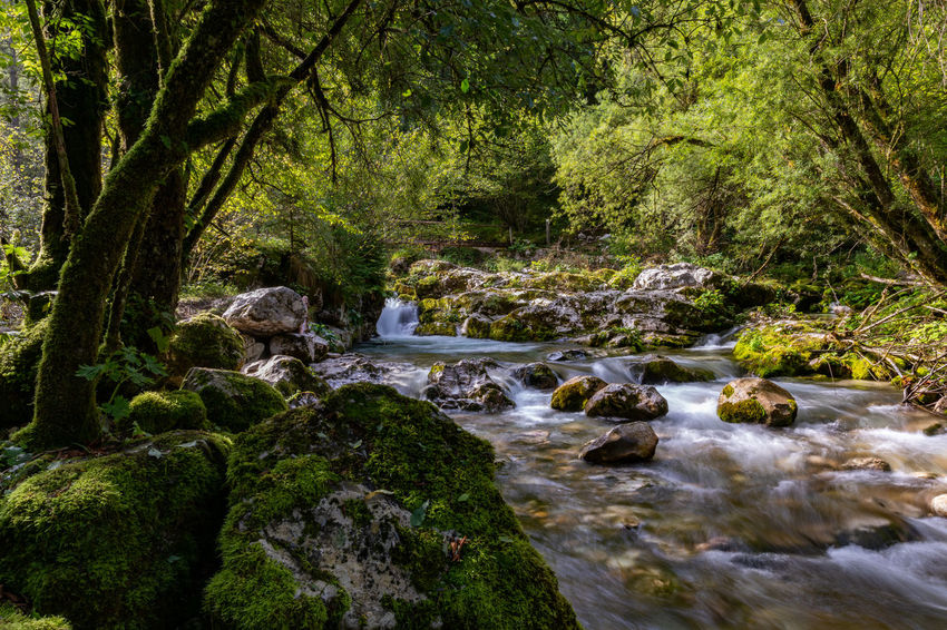 Mountain stream in the Julian Alps, Slovenia Tree Plant Water Forest Rock Rock - Object Nature River Beauty In Nature Scenics - Nature Stream - Flowing Water WoodLand Flowing Water Julian Alps Slovenia Bovec Lepena Outdoors Stream Rapids Tranquility Tranquil Scene Calm