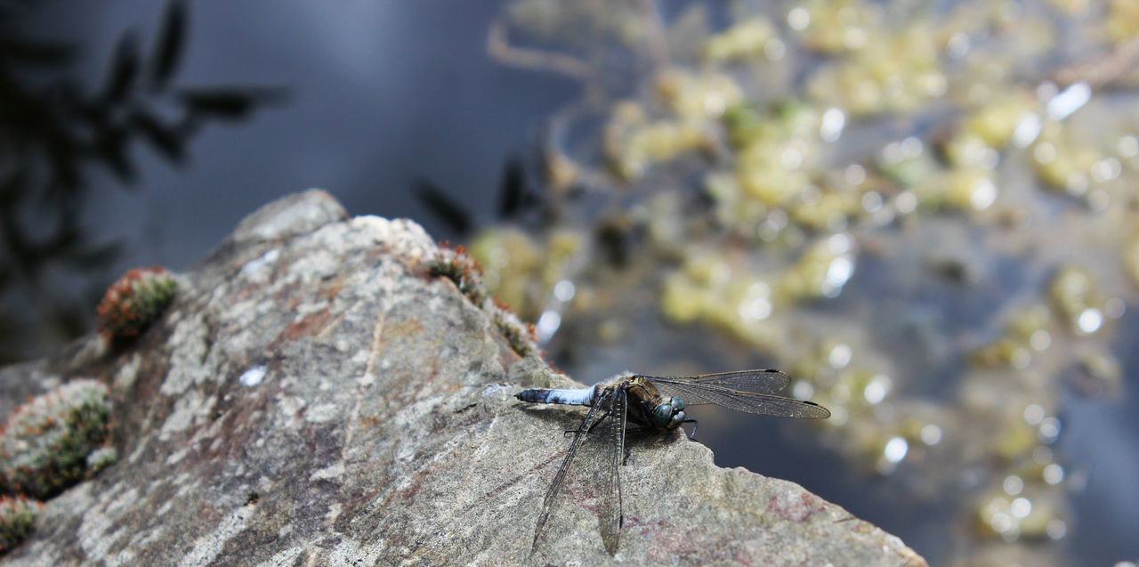 High Angle View Of Dragonfly On Rock