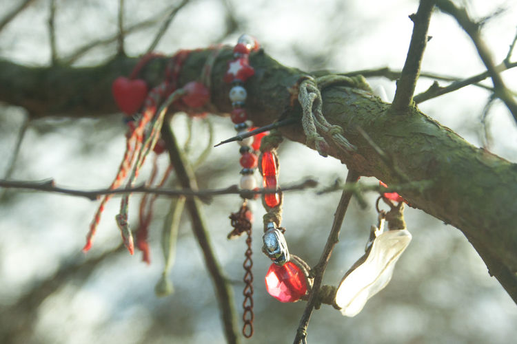 Close-up of berries on tree branch during winter