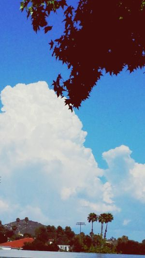 Cotton candy cloud Clouds Sky Fluffy Trees Beautiful Day