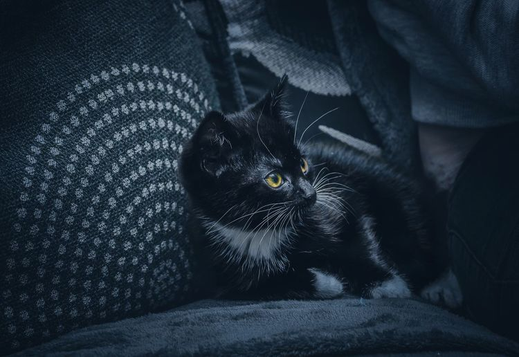 Kitten Nikon Nikonphotography Moody EyeEmBestEdits EyeEm Masterclass One Animal Mammal Pets Domestic Animals Domestic Vertebrate Looking At Camera Pet Owner Whisker Furniture Jeans Black Color Feline Cat Relaxation Domestic Cat Indoors