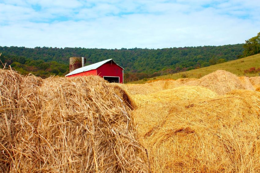 Agriculture Architecture Barn Building Exterior Built Structure Day Farm Field Hay Bale Landscape Nature No People Outdoors Rural Scene Scenics Sky Tranquil Scene Tranquility