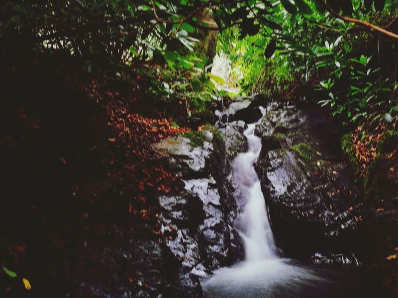 Water Nature Flowing Water Flowing Motion Waterfall Beauty In Nature Splashing Scenics Nature_collection Eye4photography  EyeEm Nature Lover Tollymore Forest Park Northern Ireland Beauty In Nature No People Nature Outdoors