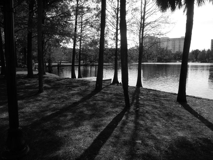 The Woods at Lake Eola Park by Leonidas Bratini Beauty In Nature Branch Building Exterior Day Growing Lake Lakeside Leondias, Nature Outdoors River Riverbank Scenics Sky Tranquil Scene Tranquility Tree Tree Trunk Treelined Water