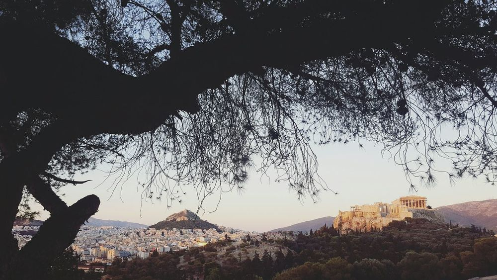 Tree Acropolis Lycabettus View View From Above Athens Greece Tourism Urban Showcase July