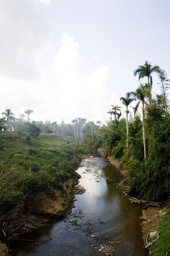 Rio San Diego, San Diego de los baños, Pinar del Río , Cuba Cuba Cuba Collection Beauty In Nature Cloud - Sky Day Environment Forest Land Landscape Nature No People Non-urban Scene Outdoors Palm Tree Plant Scenics - Nature Sky Stream - Flowing Water Tranquil Scene Tranquility Tree Water