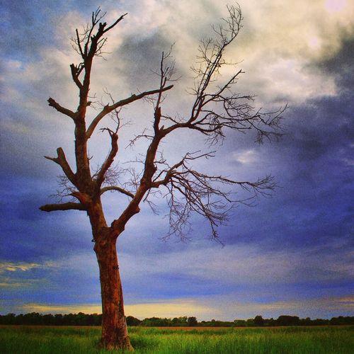 Nature Landscape Trees EyeEm Best Shots