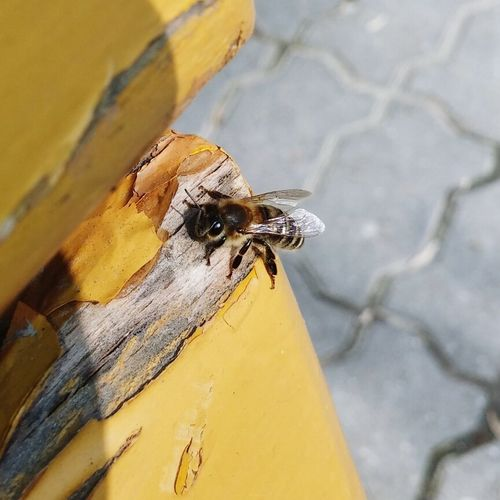 Bee Sunny Day Light Nature Insects  Urban Exploring Colors Livingplanet Day No People