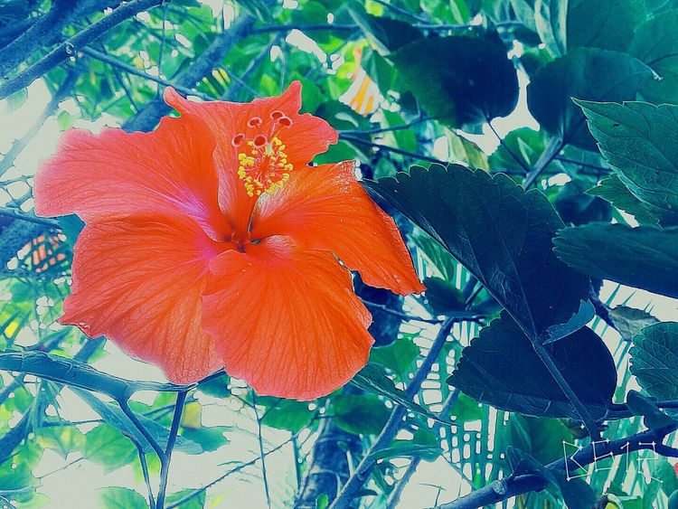 Flor Flower Nature Colors Of Nature Vintage Photo Relaxing Grungy Textures Photography
