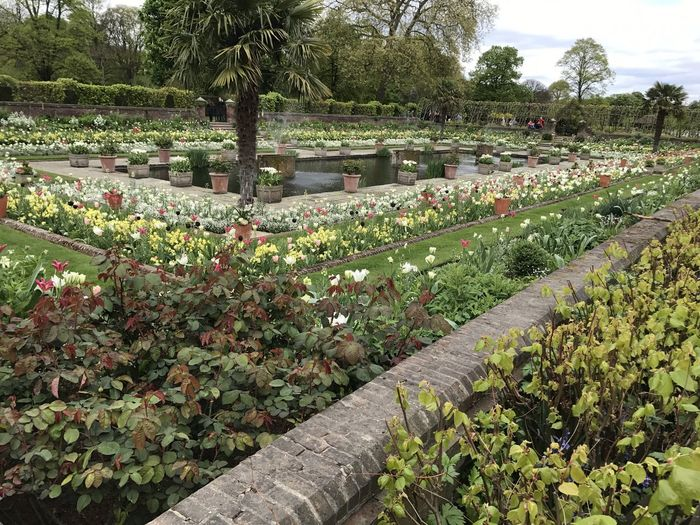 Tribute to Diama at Sunken Garden at Kensington Palace Beauty In Nature Cloudy Sky Composition Flower Fountains Freshness Full Frame Garden GB Green Color Growth Kensington Gardens Kensington Palace London London Lifestyle Nature No People Outdoor Photography Plants Sunken Garden Tree Tribute Garden Tulips Uk Water