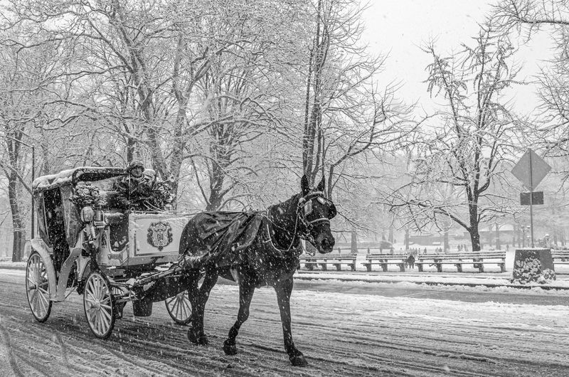 View of horse cart in winter