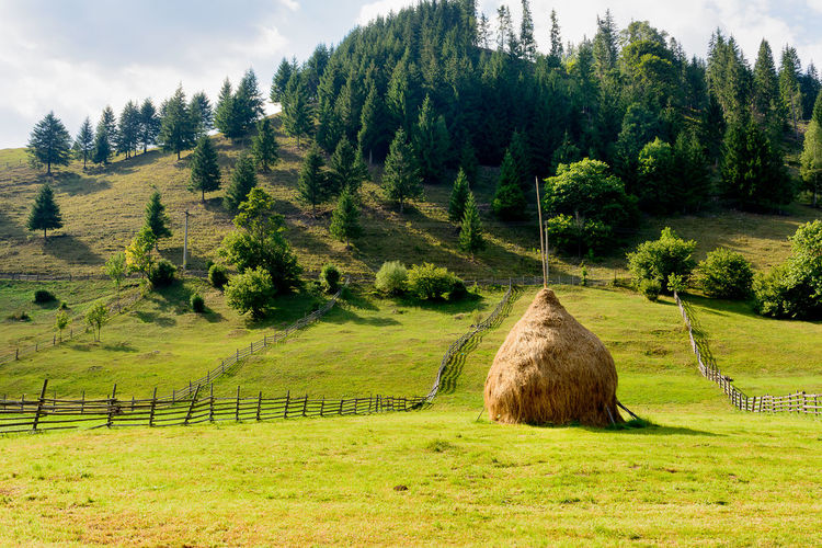 Transrarau Agriculture Bale  Beauty In Nature Cloud - Sky Farm Field Grass Grassy Green Color Growth Landscape Nature No People Non-urban Scene Rural Scene Scenics Sky Tranquil Scene Tranquility Tree
