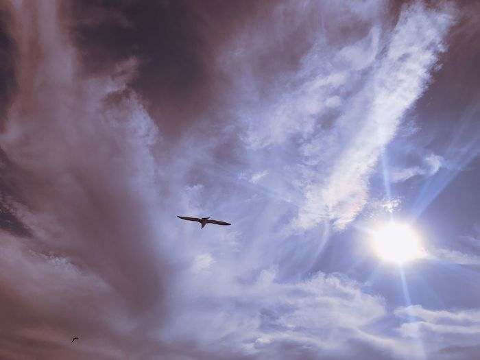 Flying Low Angle View Sky Airplane Cloud - Sky No People Transportation Outdoors Day Mid-air Nature Bird Birds Purple Sun Day Cloud Cloudy Clouds Clouds And Sky