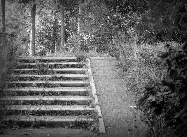 Stairway into the woods. Blackandwhite Day Monochrome Nature No People Outdoors Scenics Steps Tranquility Tree Welcome To Black