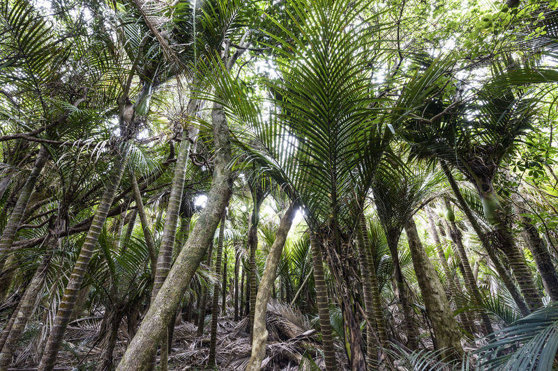 Low angle view of palm trees in forest
