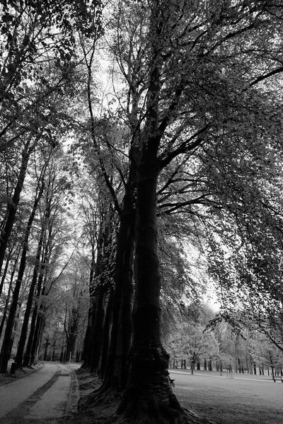 ways Nature_collection Blackandwhite Blackandwhite Photography Spring Forest Spring Is In The Air Forest Spring Black And White Ways Of Life Way Back Home Way To Go Home Way To Nature Ways And Ways Way To Heaven On Earth Black And White Photography Black And White Collection  Black & White Photography Black Forest Black And White Collection  Nature Photography Nature_perfection Nature Collection Naturesbeauty Nature Diversities Nature_ Collection