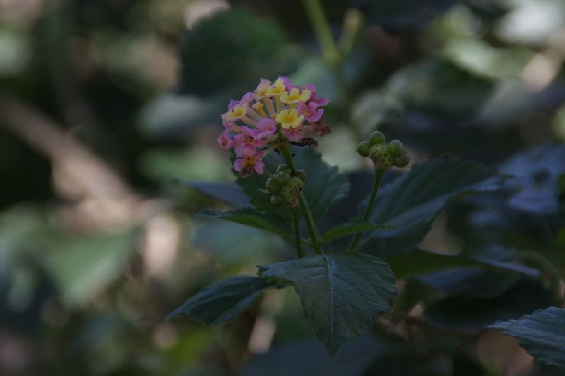 Flower Growth Fragility Nature Freshness Beauty In Nature Close-up No People Plant Petal Blooming Outdoors Day Flower Head