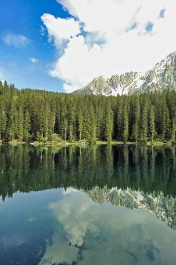Panoramic view of pine trees by lake against sky