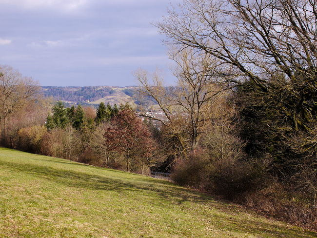 Baden-Württemberg  Beautiful Day Green Color Nature Trees Beauty In Nature Beauty In Nature Blue Blue Sky Branch Day Forest Germany Grass Landscape Meadow Nature No People Outdoors Scenics Sky Tranquility Tree Trees And Sky Wallpaper