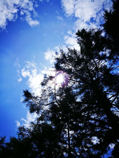 Tree Low Angle View Blue Sky Nature Sun Tranquility Beauty In Nature Huawei P9 Leica EyeEm Nature Lover Popular Naturelovers Forest Trees EyeEm Best Shots