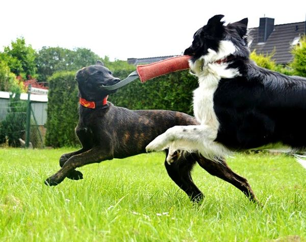 Q nature power Animals Nature Power Dogs Outdoors Fast Showcase March Atmosphere Ease Animal Play A Game Beautiful Play Together Ronja und Feebe